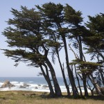 Cypress decorate the foreground