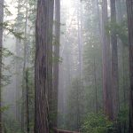 Enjoy our beautiful Redwoods